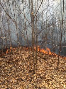 Alstead Fire